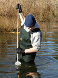 volunteer looking for egg masses