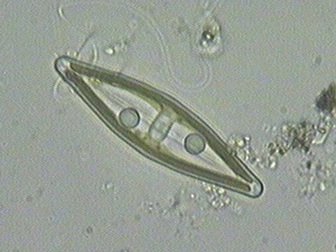 microscopic organisms - nwnature.net